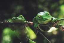 FrogFinal_detay2