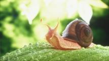 snailr